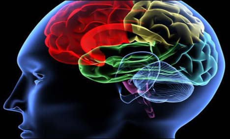Scientists-decode-how-the-brain-hears-words
