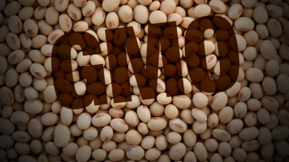 GMO-Soy-Beans