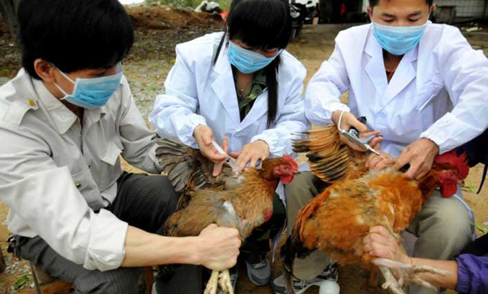 chinese-technicians-vaccinate-chickens