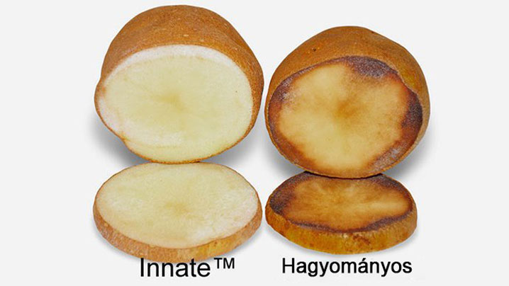 simplot-innate-potato